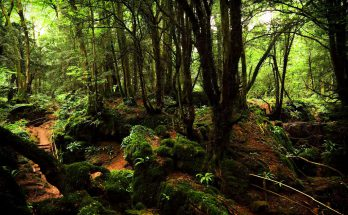 Лес Пазлвуд в Великобритании