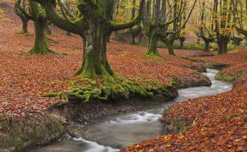 Природный парк Горбеа в Испании